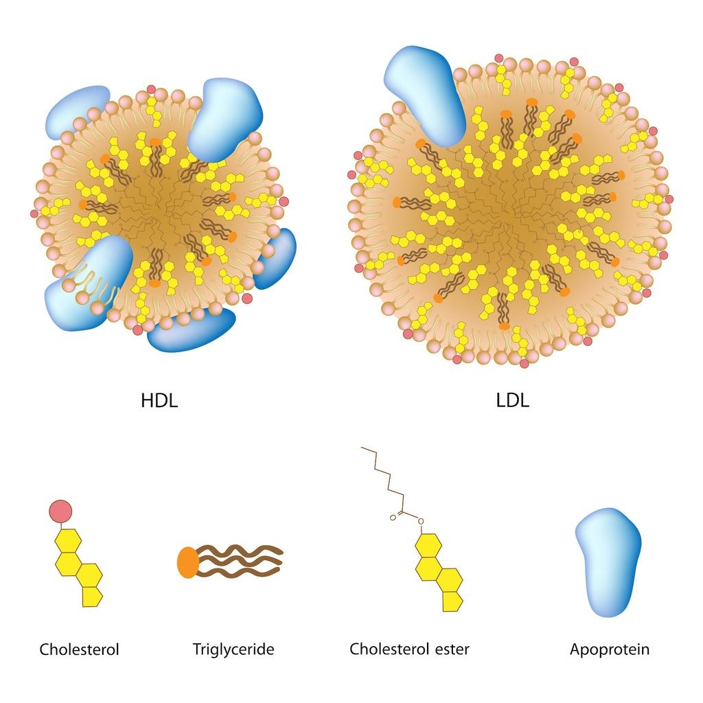 Cholesterin Abkürzung